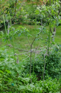 Колышек садовый «Знатный Сад» 1,8м.