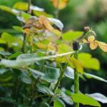 """Опора для цветов """"Знатный сад"""" миди"""